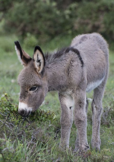 Just a Taste Donkey Foal Greetings Card